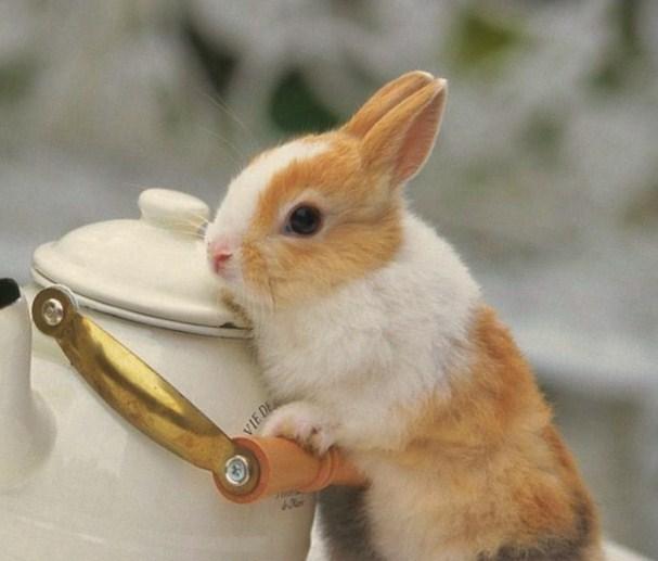 遇到大野狼的小白兔最新章节,遇到大野狼的小白兔小说下载 飘渺の小