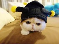 进入傻猫猫ABC的专栏