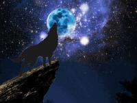 進入天狼領域的專欄